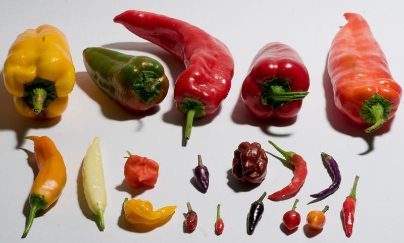 semi peperoncino